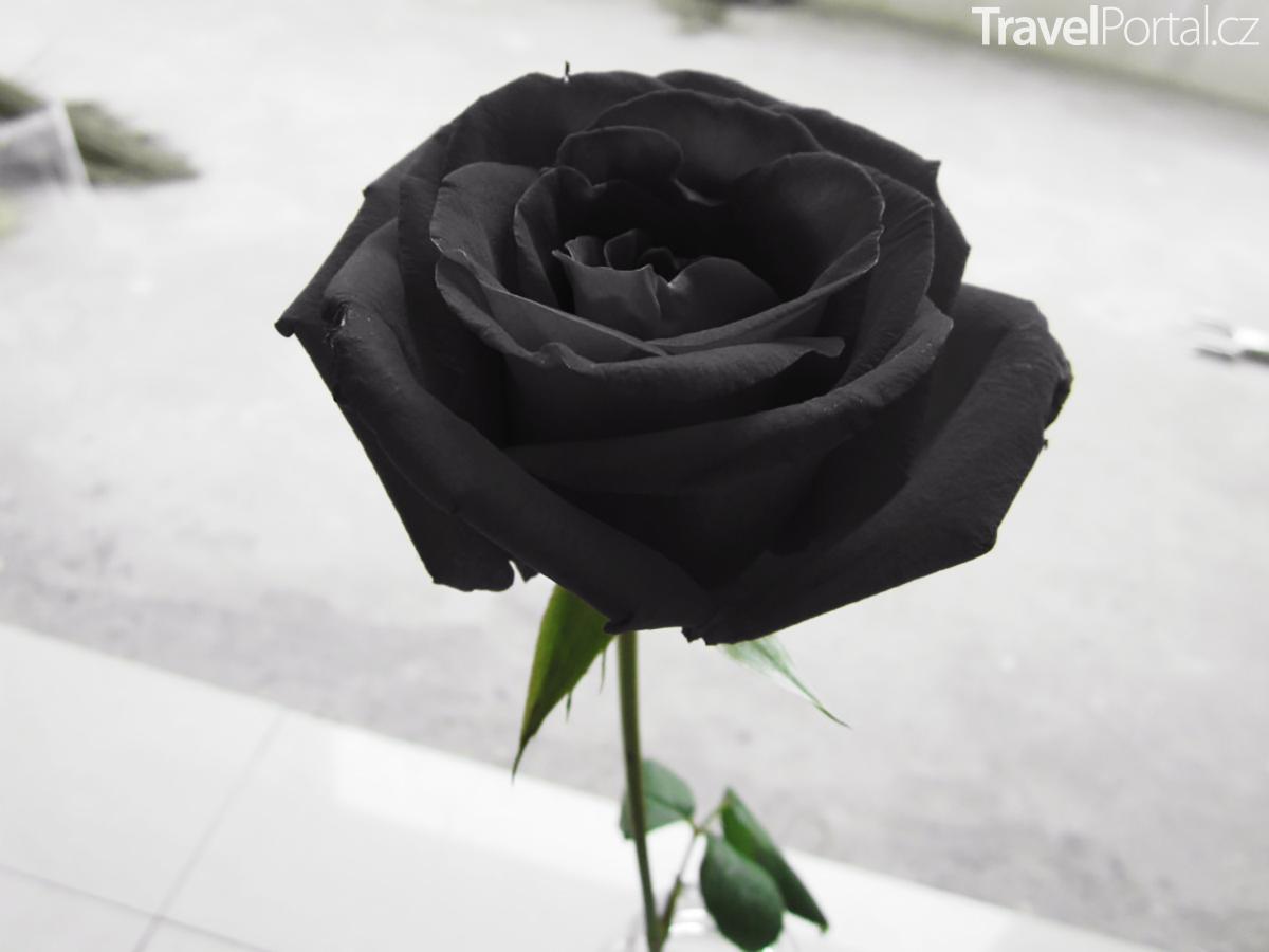 Сорта черных роз