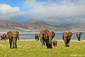 sloní stádo v národním parku Bumi