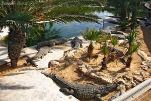 Krokodýlí farma v Djerba Explore Parku