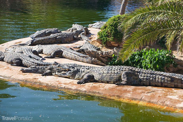 Krokodýli na Djerbě