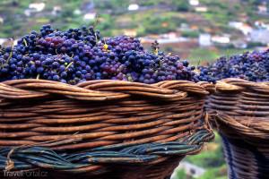 Hroznové víno Madeira