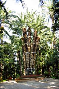 Palmy v Elche