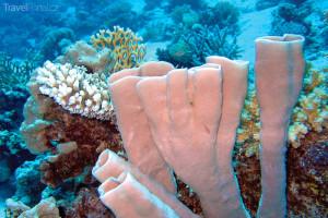 Korály v Marsa Alam