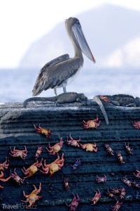 Fauna Galapády