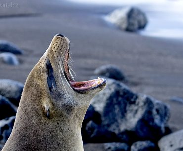 Souostroví Galapády