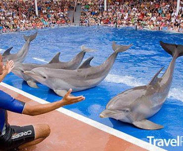 Delfinárium Marineland Mallorca