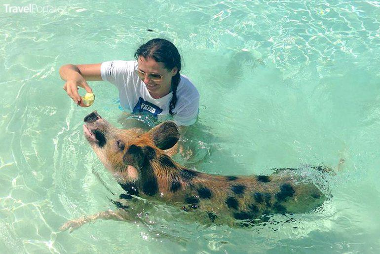 na ostrově Big Major Cay si lze zaplavat s vodními prasátky