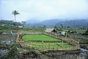 rýžové pole Sumatra Jiří Rill