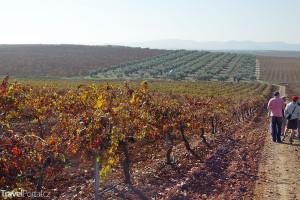 Vinice Extremadura
