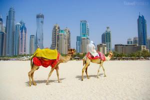 Velbloudi Emiráty