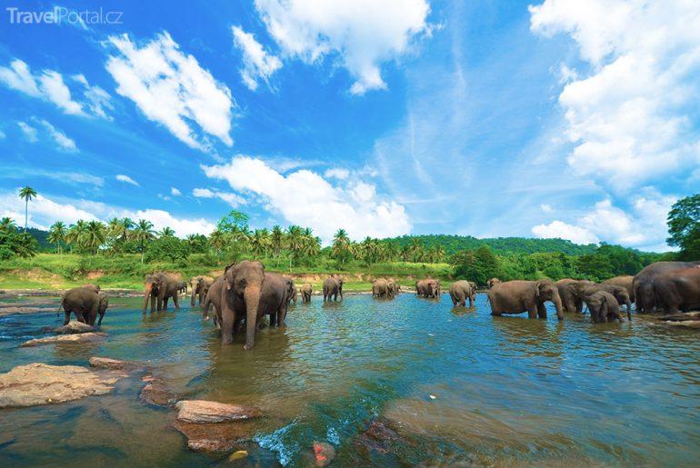 Sloni Srí Lanka