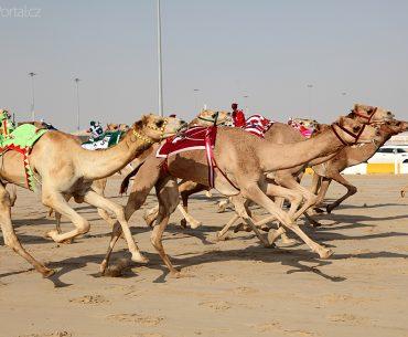 Velbloudí závody Emiráty
