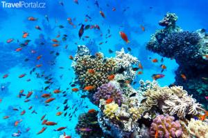 korálové útesy Keňa