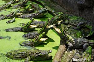 krokodýlí farma Keňa