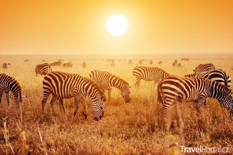 zebry safari Keňa