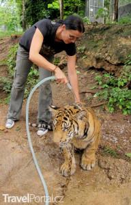 sprchování tygrů Tygří chrám