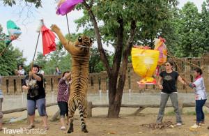 hraní si s tygry Tygří chrám