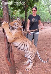venčení tygrů Tygří chrám