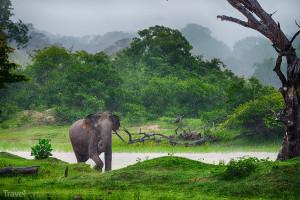 slon na Srí Lance