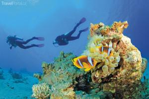 potápění Ko Tao Thajsko