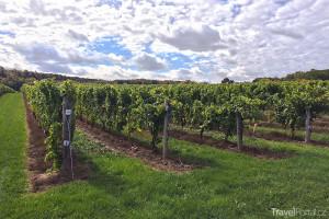 víno Niagara