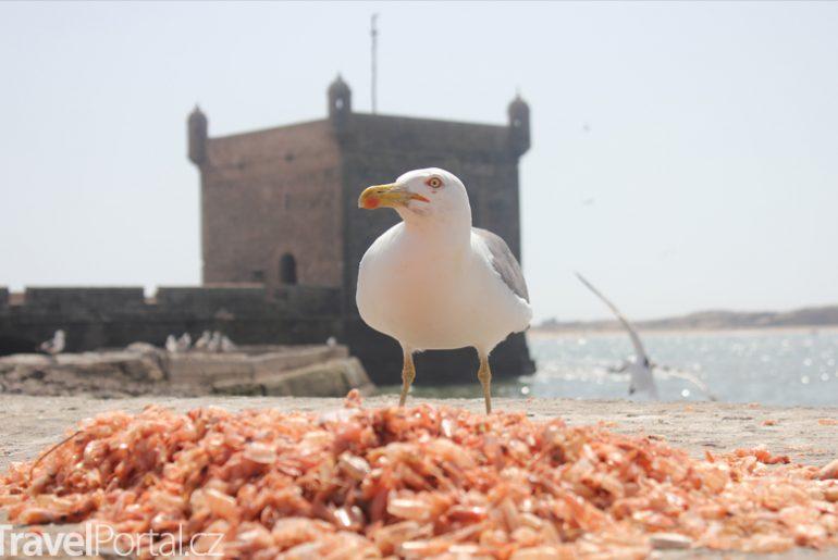 Essaouira pobřeží