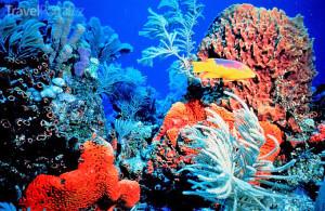 podmořský svět Bahamy