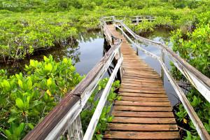 příroda Bahamy