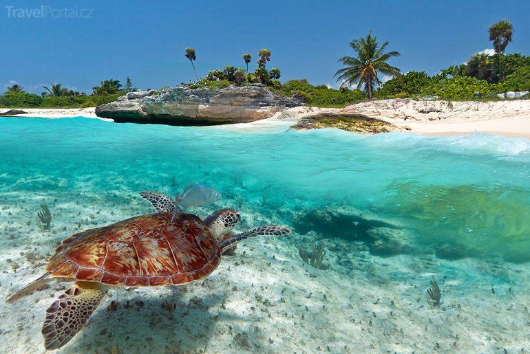 Karibik želva