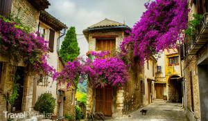Francie Provence