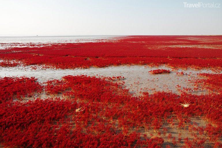 Červená pláž Red Beach Čína