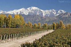 vinice Mendoza