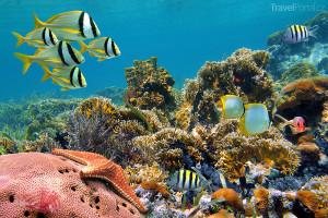 korály Karibské moře