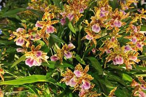 Orchideen Welt 2015