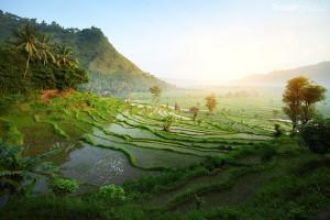 rýžové terasy Bali Indonésie
