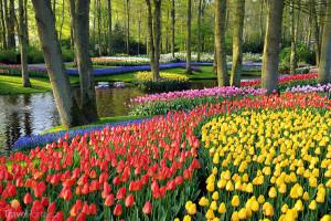 Keukenhof Nizozemsko