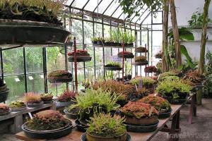 nejstarší botanická zahrada na světě Padova
