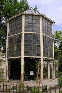 Palma di Goethe