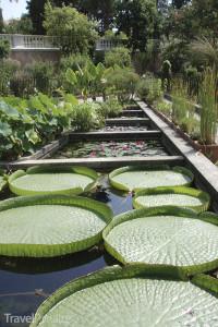 botanická zahrada v Padově