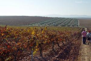 vinice Španělsko