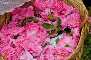 růže v Údolí růží