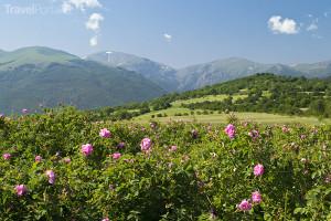 Údolí růží Bulharsko