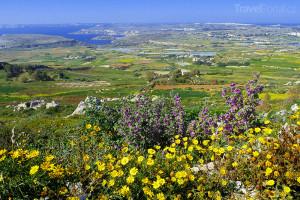 příroda na Maltě