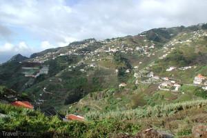 vinice na Madeiře