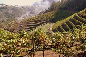 vinohrad Madeira
