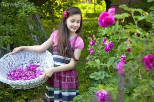 dívka sbírá růžové květy v Bulharsku