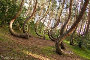 Křivý les Polsko