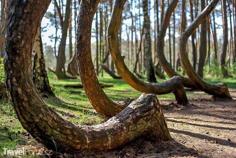 Krzywy las neboli Křivý les