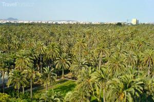 Palmeral de Elche neboli Palmový háj v Elche