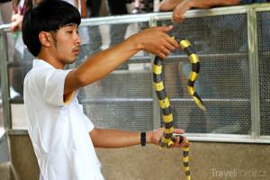 Red Cross Snake Farm